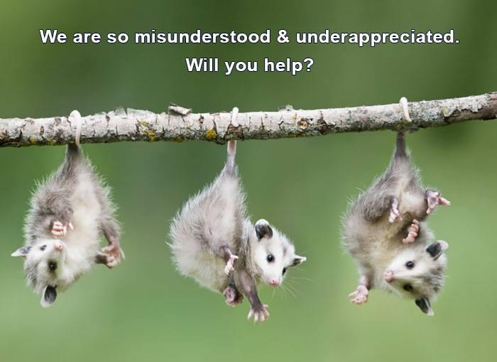 opossum+help